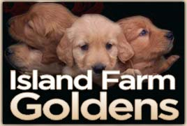 Island Farm Goldens